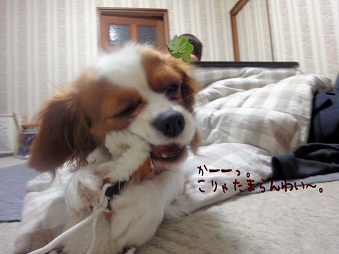 004_20100115232755.jpg