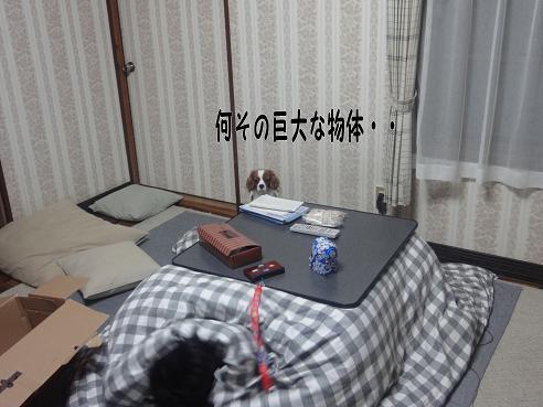 006_20091204224104.jpg