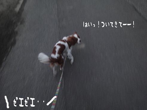 007_20091205221936.jpg