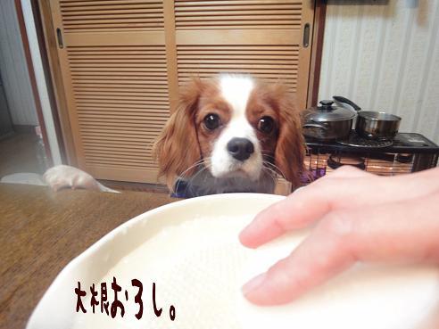 009_20100105214837.jpg