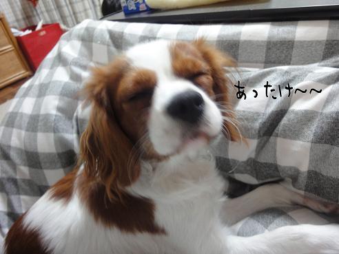 013_20091205221935.jpg