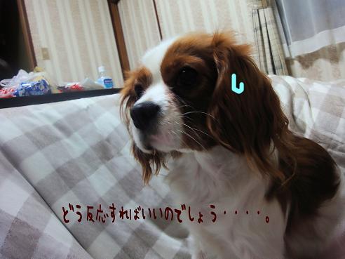 021_20100117221051.jpg