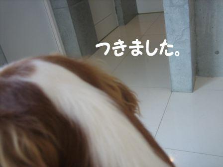 IMG_2082.jpg