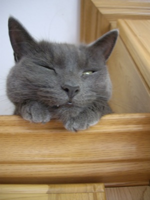 cat sleep trillian
