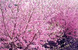 桃畑ブログ