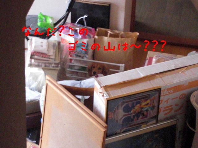 CIMG1057-1.jpg