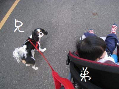 弟とお散歩