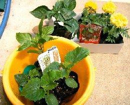 野菜の栽培・育て方