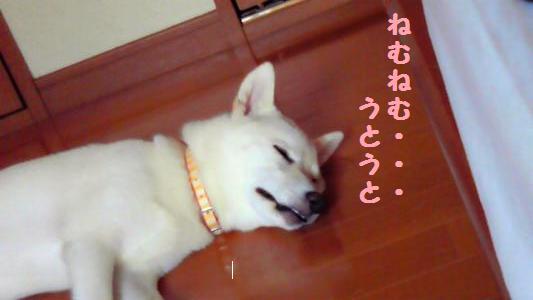 眠りももさん
