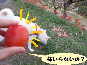 柿が・・・