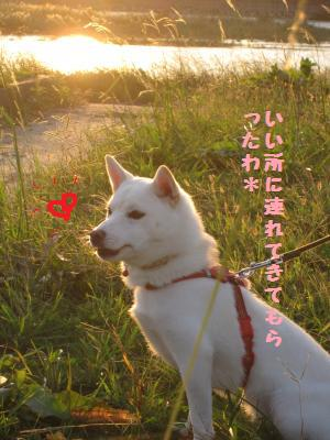 宮川さんぽ4