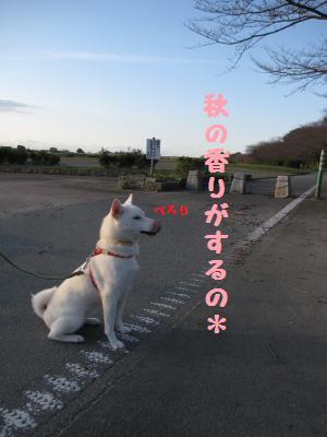 宮川さんぽ