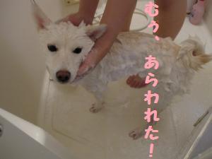 洗われた・・・