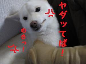 くまさん5