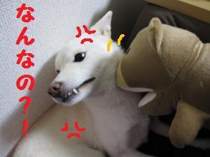 くまさん4