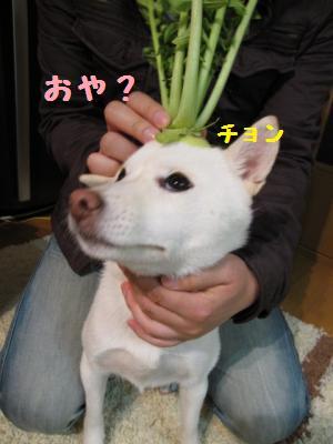 daikon2.jpg