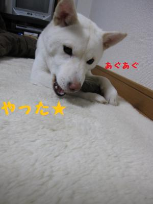 ki4.jpg