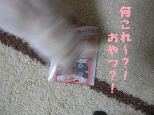 kotuban1.jpg