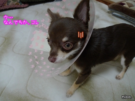 P1030020_20091029203435.jpg
