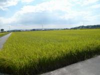 吉備路-田園風景