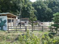 吉備路-若駒牧場