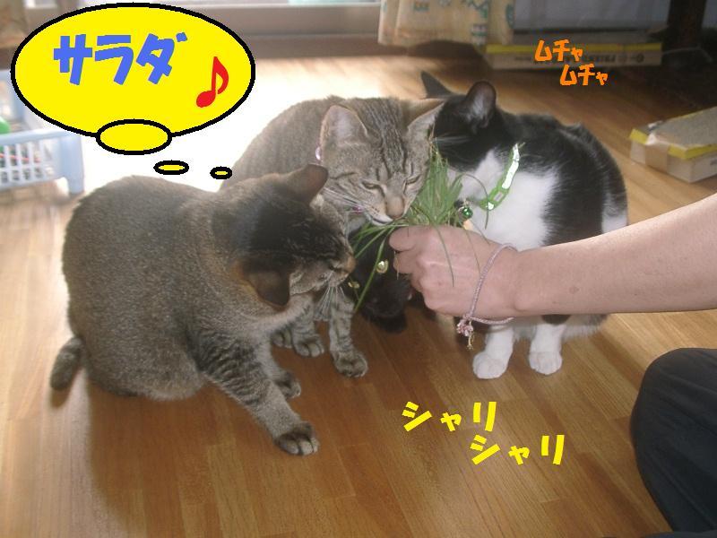 サラダかい!?