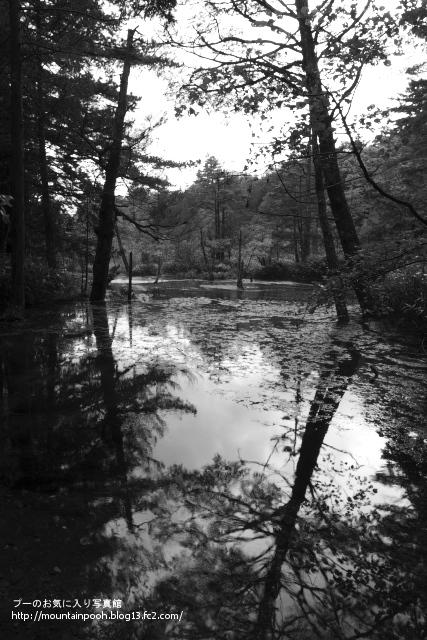 池(モノクロ)
