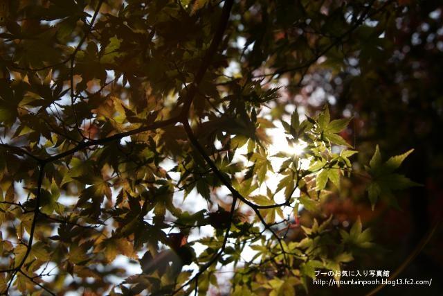 大山-紅葉2