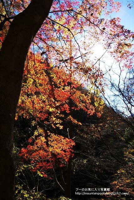 畦ヶ丸紅葉3
