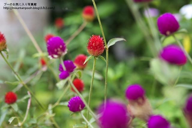 由布島の花4