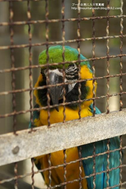 由布島の鳥