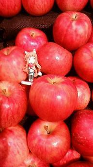 ホロと林檎