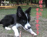 blogmura02.jpg