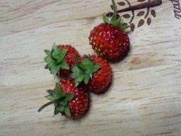 2011berry