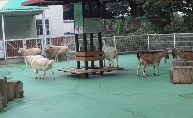 ヤギとひつじたち