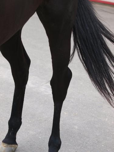 マイネイディール、左後ろ脚の腫れ