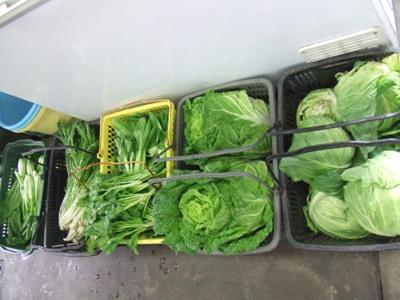 2011_0610自家菜園野菜