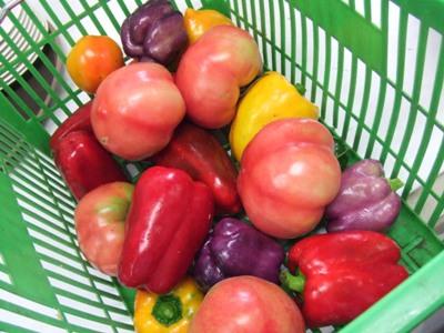 2011_0728トマト、パプリカ