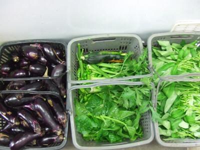 2011_0728ナス、セロリ、空芯菜