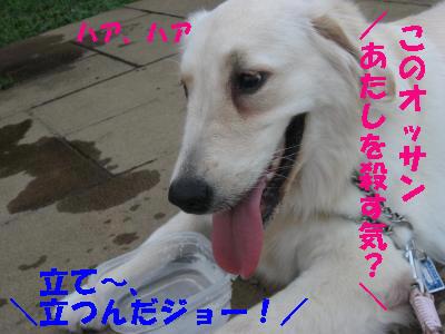 IMG_4092_convert_20090813105303.jpg