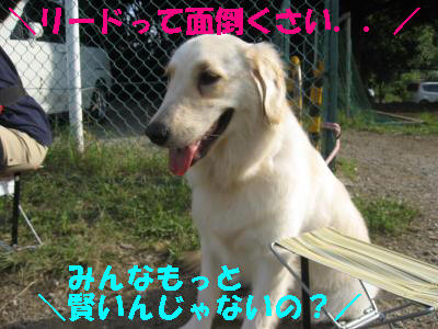 IMG_4771.jpg