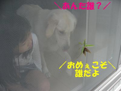 IMG_5271_convert_20091107110814.jpg
