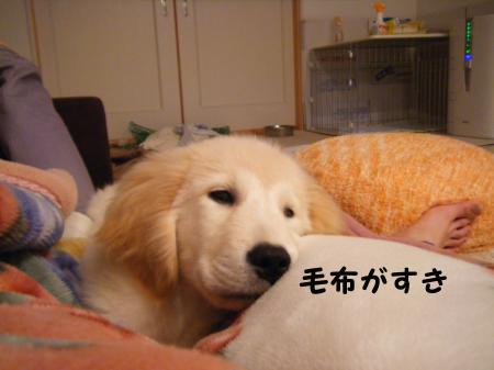 毛布がすき