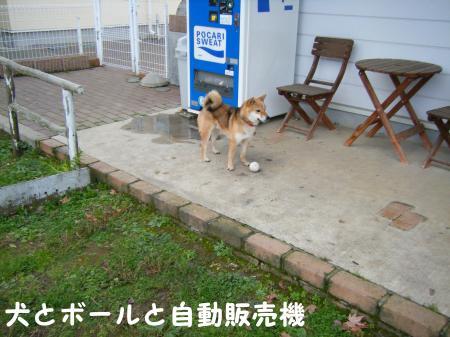 犬とボールと自動販売機