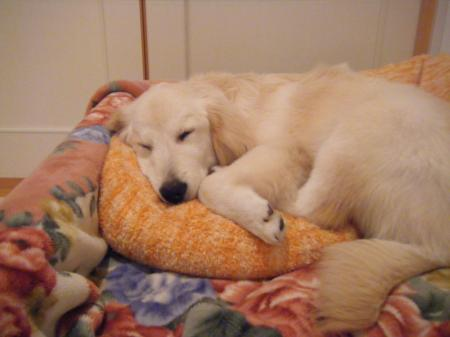 犬カイロ2