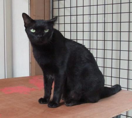 1-Black cat