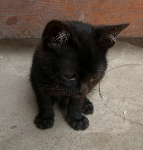 1-Black cat2