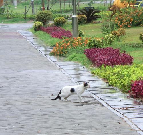 2-Laos 004