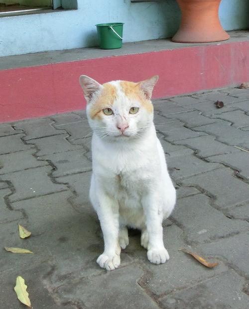 2-Laos 010
