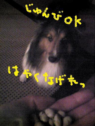 Image668.jpg